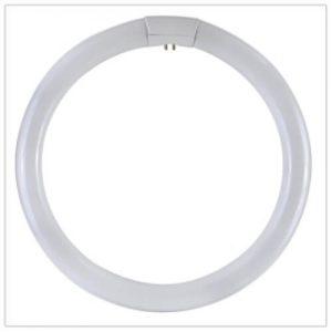circolina